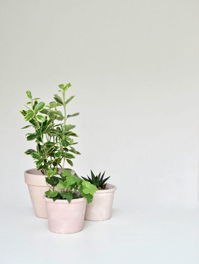 DIY: cheats way to age terracotta pots