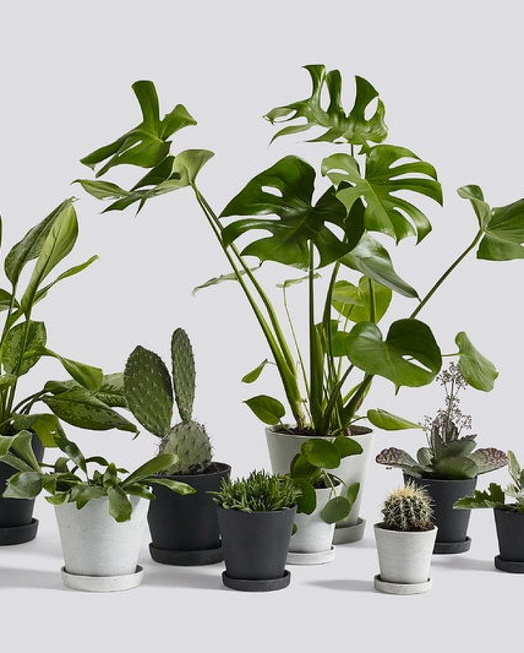 minimalist plant pots